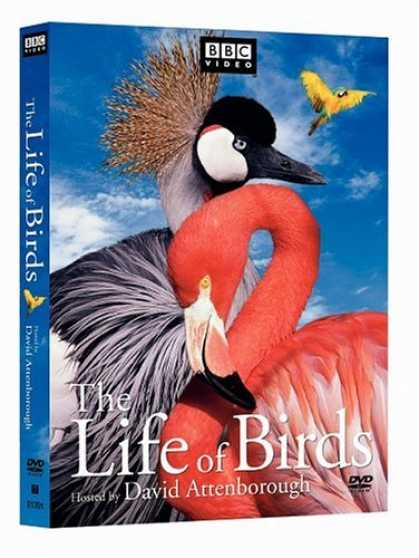 Bestselling Movies (2006) - The Life of Birds by Joanna Sarsby
