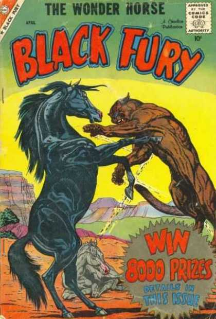 Black Fury 18 - Wonder - Horse - Fury - Contest - Big Cat