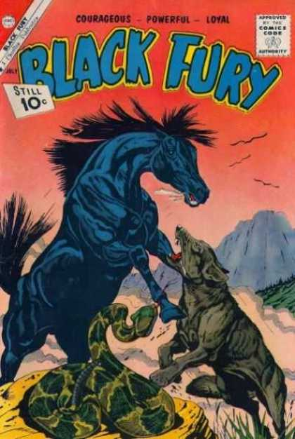 Black Fury 31 - Horse - Snack - Coyote - Fight - Mountains