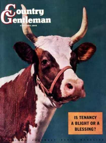 Country Gentleman - 1945-02-01: Long-Horned Cow (F.P. Sherry)