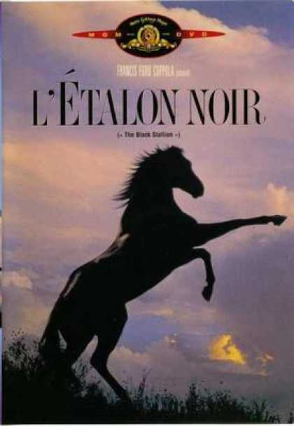 French DVDs - The Black Stallion