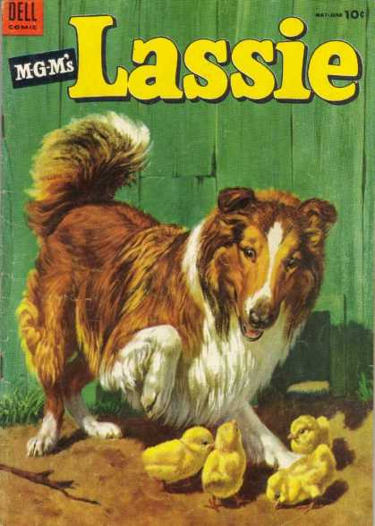 Lassie 16 - Collie - Dog - Chicks - Fur - Feathers