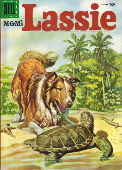 Lassie 26 - Rough Collie - Turtle - Beach - Palm Trees - Sand And Sea