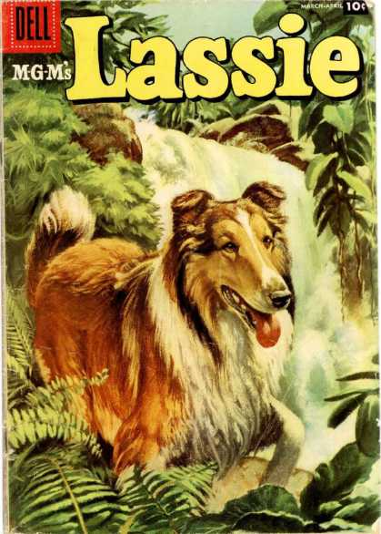 Lassie 33 - Collie - Dog - Tougue - Waterfall - Forest