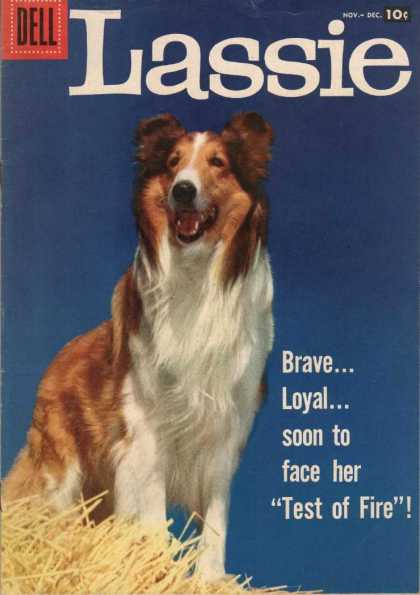 Lassie 37 - Dog - Furry - Brave Loyal - Soon To Face Her Test Of Fire - Haystack