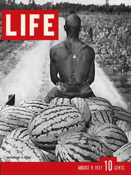 Life - Watermelon Harvest