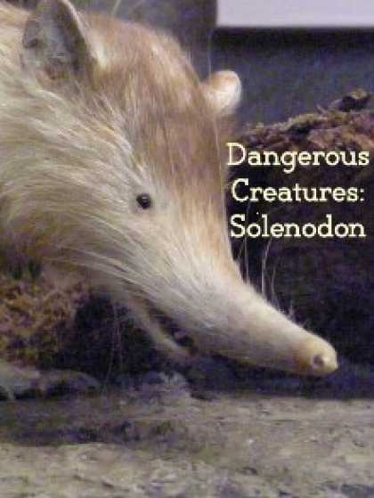 Role Playing Games - Dangerous Creatures: Solenodon
