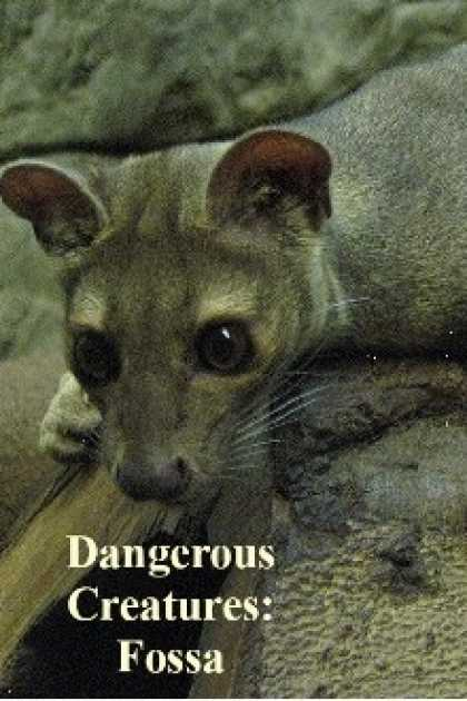 Role Playing Games - Dangerous Creatures: Fossa