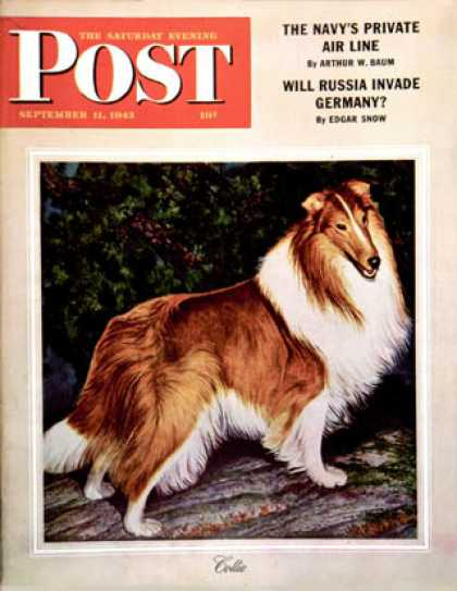Saturday Evening Post - 1943-09-11: Collie (Rutherford Boyd)