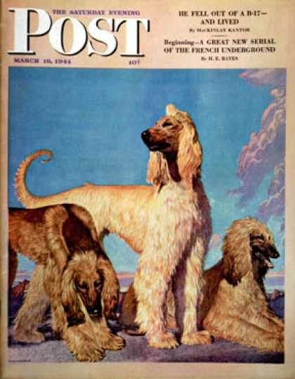 Saturday Evening Post - 1944-03-18: Afghan Hounds (Rutherford Boyd)