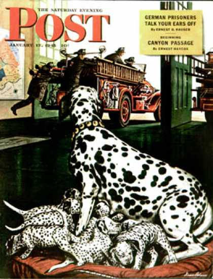 Saturday Evening Post - 1945-01-13: Dalmatian and Pups (Stevan Dohanos)