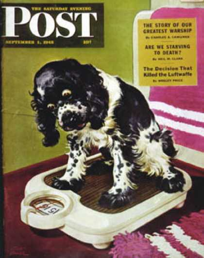 Saturday Evening Post - 1945-09-01: Butch Weighs In (Albert Staehle)