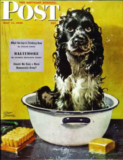 Saturday Evening Post - 1946-05-11: Butch Gets a Bath (Albert Staehle)