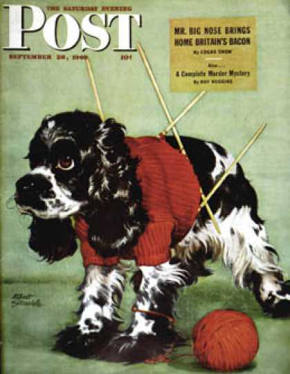 Saturday Evening Post - 1946-09-28: Butch and Knitted Sweater (Albert Staehle)