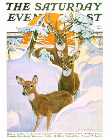 Saturday Evening Post - 1931-02-07: Deer in Snow (Paul Bransom)