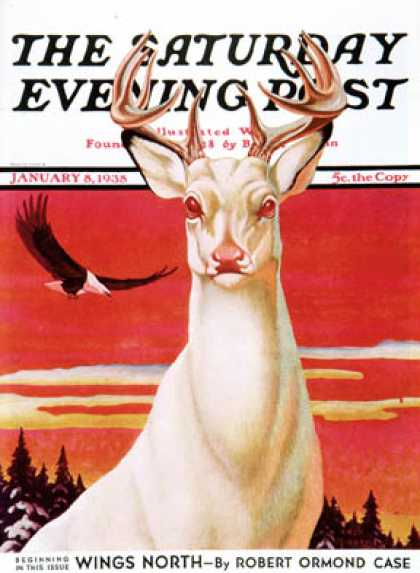 Saturday Evening Post - 1938-01-08: Albino Deer (Jack Murray)