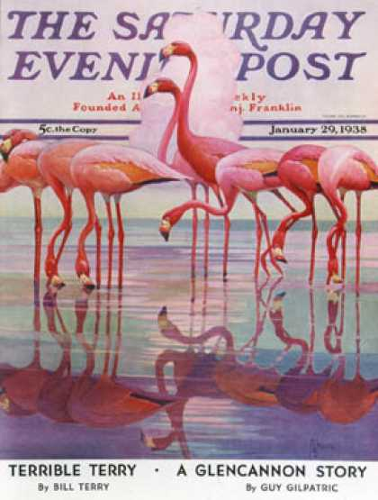 Saturday Evening Post - 1938-01-29: Pink Flamingos (Francis Lee Jaques)