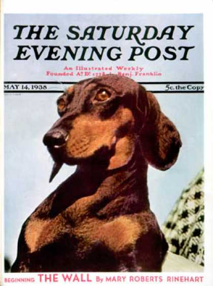 Saturday Evening Post - 1938-05-14: Dachshund (Ivan Dmitri)