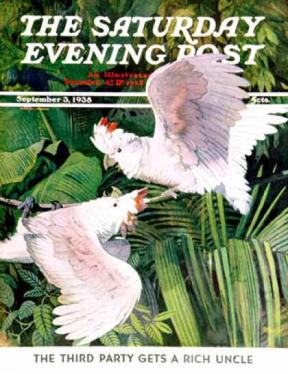 Saturday Evening Post - 1938-09-03: Two Cockatoos (Julius Moessel)