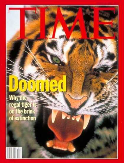 Time - Endangered Tigers - Mar. 28, 1994 - Animals - Wildlife - Environment